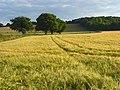 Farmland, Bledlow - geograph.org.uk - 892891.jpg