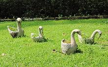 Pato  Wikipedia la enciclopedia libre