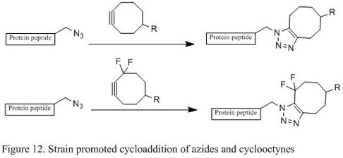 Figure 12. Strain promoted cycloaddition of azides and cyclooctynes.jpg