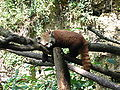 Firefox 2005-07-06.jpg