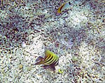 Fish 1 (25361401069).jpg