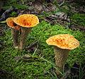 Flickr - Nicholas T - Forrest H. Dutlinger Natural Area (Revisited) (15).jpg