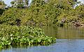 Flickr - ggallice - Pantanal.jpg