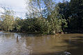Flooding In Dublin - River Dodder, The Day After.jpg