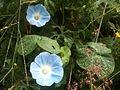 Flor - panoramio (10).jpg