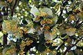 Floraison du solstice.jpg