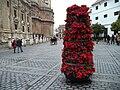 Flores de pascua en un macetero cerca de la Catedral de Sevilla.jpg