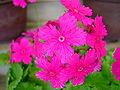 Flower-center130630.jpg