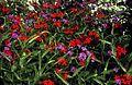 Flower bed (8918445768).jpg