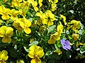 Flower planter close-up, Walthamstow Avenue, London Borough of Waltham Forest, England.jpg