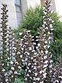 Flowers P5240049.JPG