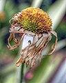 Flowers of Ireland (8183902452).jpg