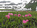 Flowers on lakeside.JPG