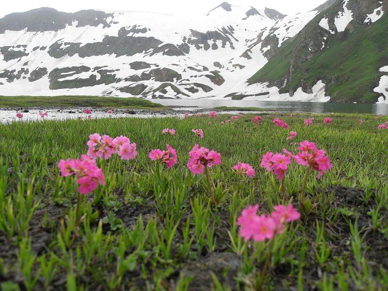 File:Flowers on lakeside.JPG