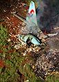 Flugzeugabsturz Korean Airlines Flug 801.jpg
