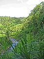 Forêt pres de Ubud.jpg