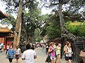 Forbidden City, Garden.jpg