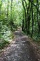 Forest @ Roc de Chère @ Talloires (35645778255).jpg