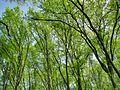 Forest - panoramio - paulnasca (118).jpg
