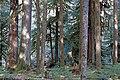 Forest sol duc campground scenic r mckenna march 2015 edited-1 (17313664141).jpg
