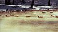 Fox River Dam (13950295530).jpg