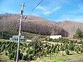 Frank, NC 28657, USA - panoramio (1).jpg