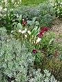 Front Garden - Flickr - peganum (3).jpg