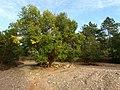 Fuente Cerrada, rio Valdelobos - panoramio.jpg