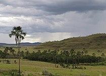 Gallery forest in Cerrado.jpg