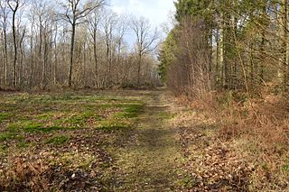 Gamlingay Wood nature reserve in the United Kingdom