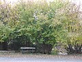 Garden of the Franciscan monastery in Katowice Panewniki 039.JPG