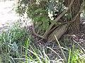 Gardenology-IMG 5018 hunt10mar.jpg