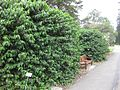 Gardenology.org-IMG 2708 rbgs11jan.jpg