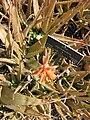 Gardenology.org-IMG 4232 hunt0904.jpg