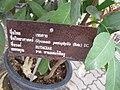 Gardenology.org-IMG 7687 qsbg11mar.jpg