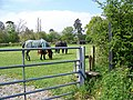 Gate and stile, Hisomley - geograph.org.uk - 1282880.jpg