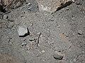 Geologic formations at Skull Rock (28453900054).jpg
