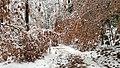 Georgia snow IMG 4481.mp4 (25075932978).jpg