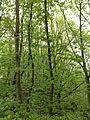 Germany, Bayern ,Erlangen Forest..jpg