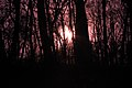Gfp-iowa-pikes-peak-state-park-purple-sun-through-trees.jpg