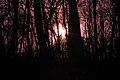 Gfp-iowa-pikes-peak-state-park-purple-sun-through-trees.jpg
