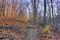 Gfp-missouri-babbler-state-park-steps-up-the-hill.jpg