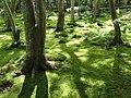Giō-ji - Kyoto - DSC06271.JPG