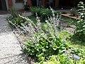 Giardino botanico di Brera (Milan 21.jpg