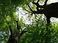Gießen-Wieseck, Adam und Eva 07.jpg