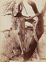 Gloeden, Wilhelm von (1856-1931) - n. 0331 - recto.jpg