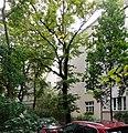 Glogera 3 za drzewami.jpg