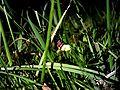 Glow worm 660030626.jpg