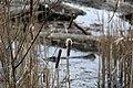 Gog-le-hi-te-wetlands 02-17 12.jpg