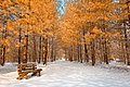 Gold Winter Pine Trail - HDR (20015703808).jpg